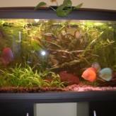 Cómo cambiar tu acuario