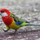 El Loro Multicolor