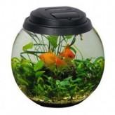 Acuario para peces pequeños