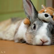 Cuidados de conejos