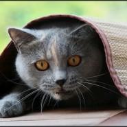 La ansiedad en los Gatos