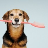 Las caries en los perros