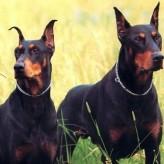 Los Perros de Defensa