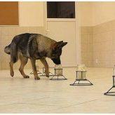 Los Perros y su Olfato