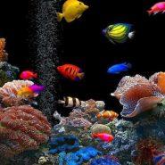 Peces que no pueden vivir en un Acuario