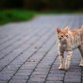 Por qué los Gatos mueven la Cola