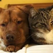 Síntomas de la alergia a las Mascotas