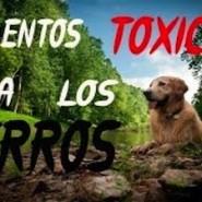 Alimentos tóxicos para los Perros
