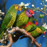 Aves ideales como Mascotas
