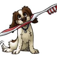 Cepillado de dientes al perro