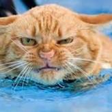 Cómo controlar un Gato Agresivo