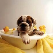 Cuidado de perros