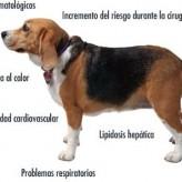 Enfermedades en perros