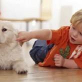 La relación entre Perros y Niños
