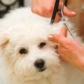 Qué hacer para que tu Perro pierda menos pelo