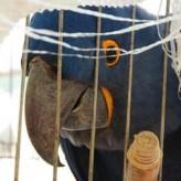Aves en cautiverio Enfermedades