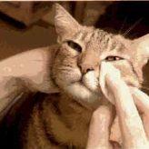 Cómo limpiar los ojos a un Gato