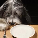 Dieta para Perros con diarrea