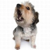 El lenguaje del Cachorro