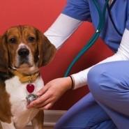 Enfermedades infecciosas en perros