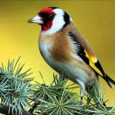 Los Pájaros Cantores