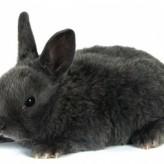 Tratamiento para Conejos con Pulgas