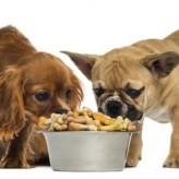 Consejos para alimentar nuestros perros