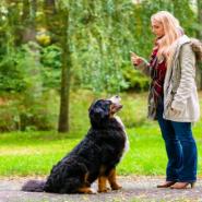 Educación Canina para Principiantes
