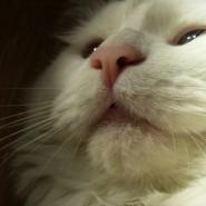 Enfermedades en Gatos