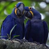La depresión en las Aves