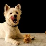 Los Cachorros y el horario de sus Comidas