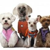 Ropa para perros