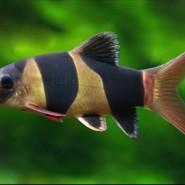 Tres Tipos de peces para tu Acuario