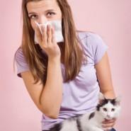 Cómo evitar la alergia a las Mascotas