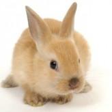 Cómo elegir un buen Conejo