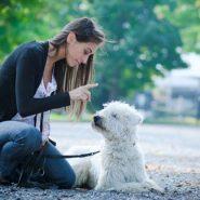 Cómo socializar nuestro Perro