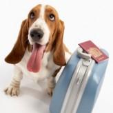 Las Mascotas en Vacaciones