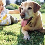Los mejores Perros para Niños Hiperactivos