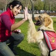 Pasos negativos en la educación de Mascotas
