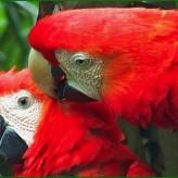 Sobre aves