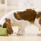 Sopas caseras para Perros
