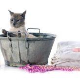 El champú más adecuado para tu Gato