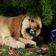 Cómo cuidar tu Mascota en Navidad