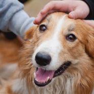 Cosas que tu Perro no Soporta