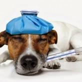 Diarrea en Perros Consejos