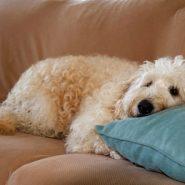 Elimina el mal olor de tu Mascota