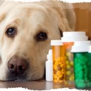 Enfermedades de perros