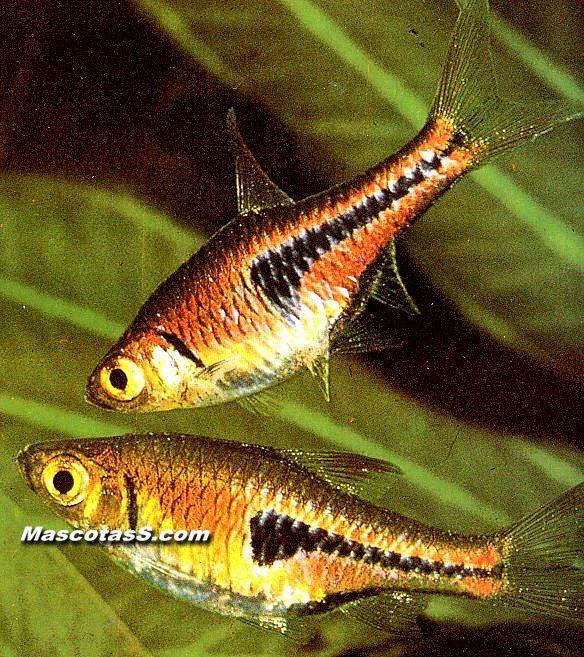 Los peces mas lindos y coloridos del mundo