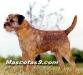 Border Terrier 05.jpg