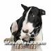 bull terrier 04.jpg